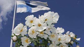 LK, 210621, juhannus, juhannusruusu, suomen lippu, suomi