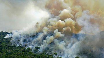 Amazonin sademetsä palaa.