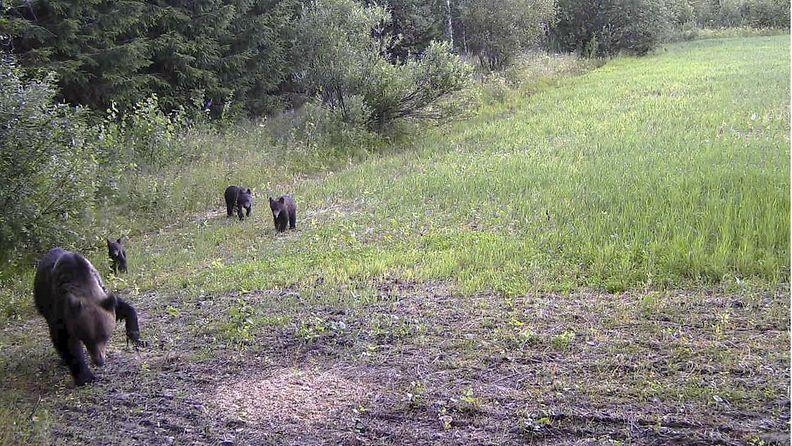 LK 22.7.21. - karhu, joensuu, karhuemo