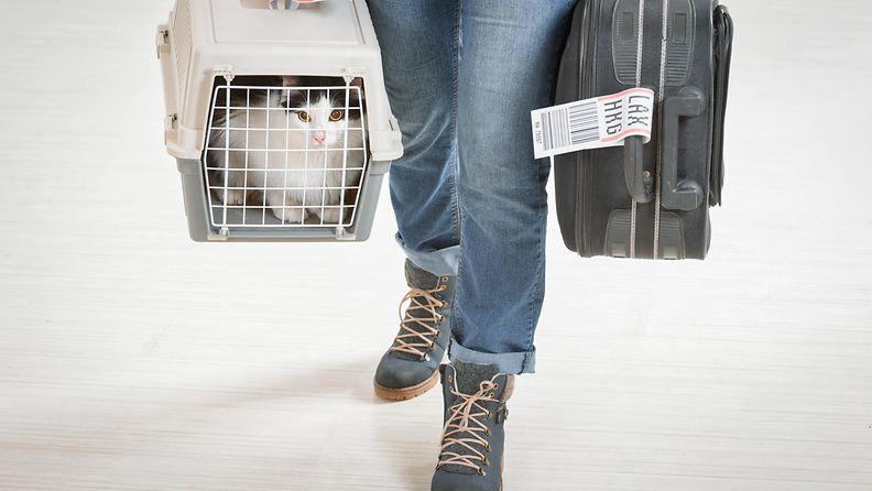 Kissaa kannetaan lentokentällä.