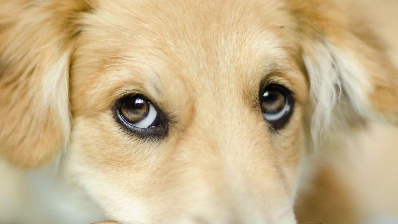 koiranpentuilme