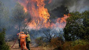 Pelastajat suuntaavat paloletkun kanssa roihuavaan metsään.