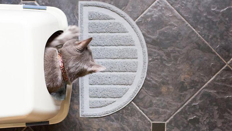 Kissa kissavessassa.