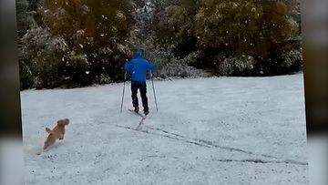 Oulun ensilumessa hiihtäjö