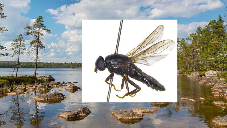 karpanen-uusilaji