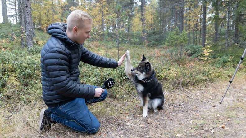 OMA: Muru-koira, Hailuoto