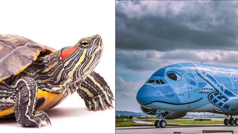 kilpikonna_lentokentta