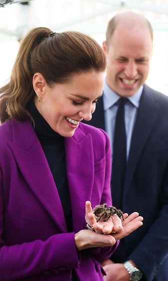 AOP Herttuatar Catherine hämähäkki