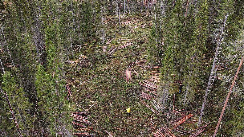 Greenpeacen kuva Valtio hakkaa luonnonmetsiä Suomussalmella – Greenpeace paikalla
