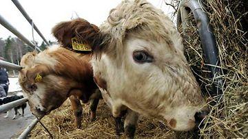 Luomulihalle on tarkat säännökset.