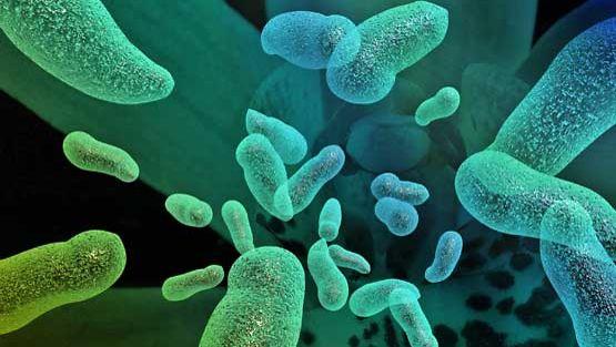 Tunnetuille antibiooteille vastustuskykyistä bakteeria on havaittu Intiassa reissanneilta ruotsalaisilta.