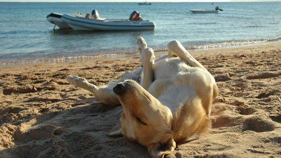 Koiratkin nauttivat kesästä.