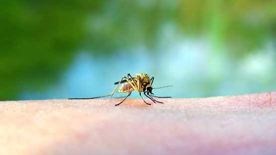 Malariaa tuodaan Länsi-Afrikasta.