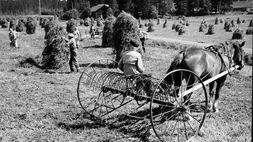 Huutolaislapset tekivät usein peltotöitä.