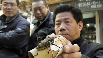 Kiinalaiset miehet ostamassa heinäsirkkoja.