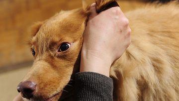 Kuvituskuva. Koiraa ei vahingoitettu kuvauksessa. Lehtikuva.