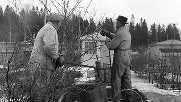 Lehtikuva/Kalle Kultala
